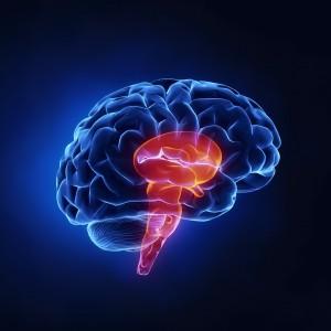 Brain shutterstock_91896824