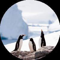 Penguins (Circle)